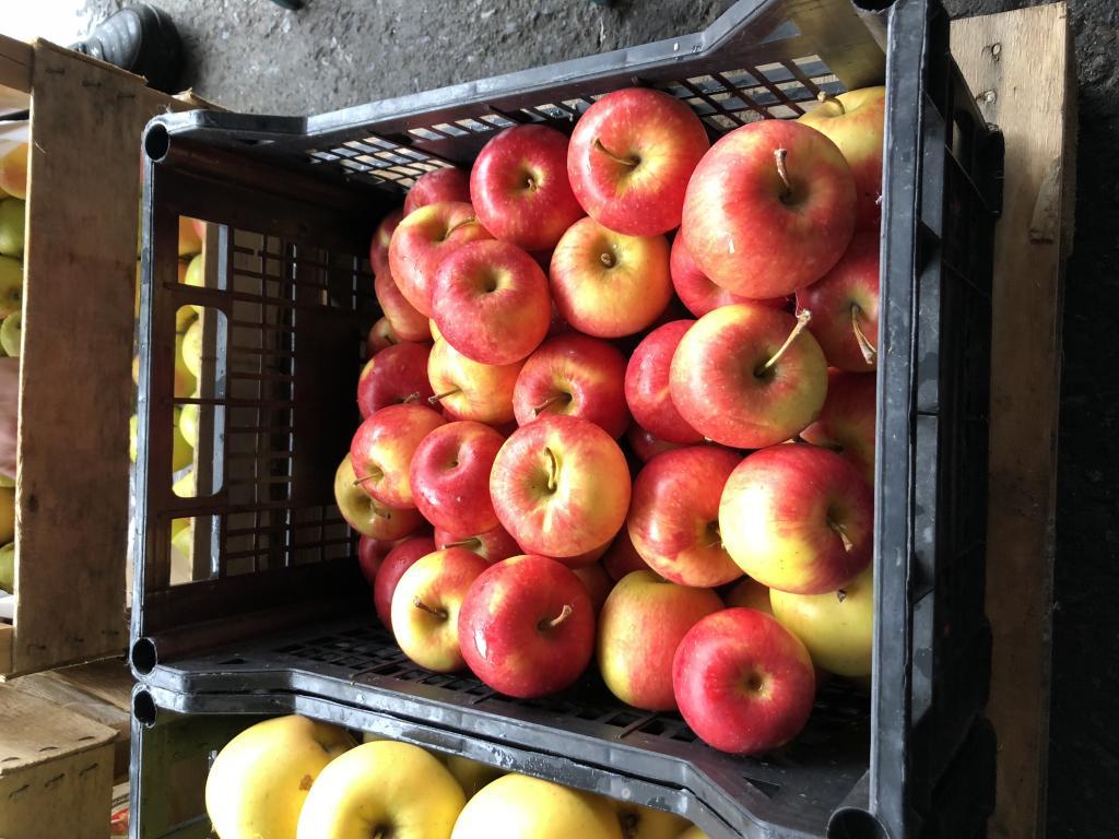 Яблоки, оптом и в розницу