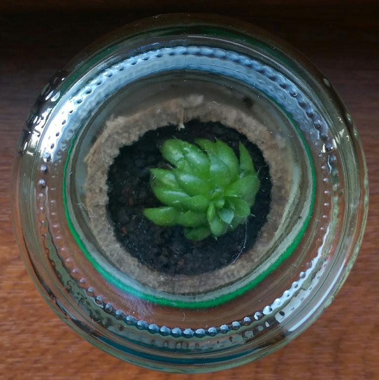 Кактусы в баночке мини-террариум
